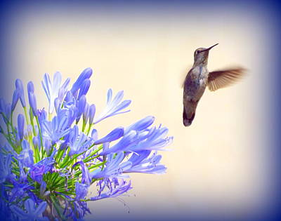 Hummer In Blue Art Print