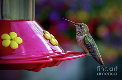 Photograph - Hummer by Jon Burch Photography