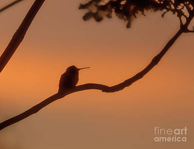 Photograph - Hummer Silhouette by Robert Bales