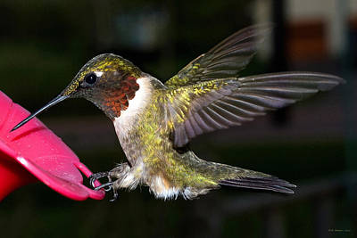 Photograph - Hummer by WB Johnston