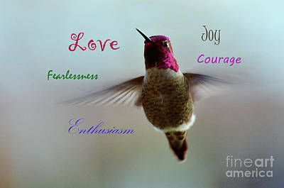 Photograph - Hummingbird Attributes by Debby Pueschel