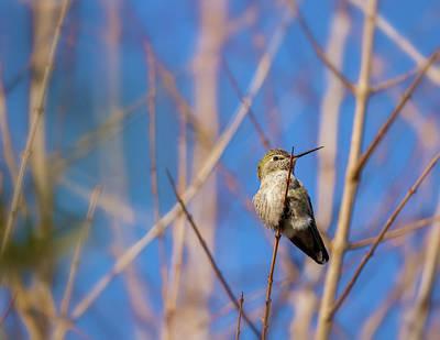 Photograph - Humming Bird 2 by Jonathan Nguyen