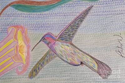 Animals Drawings - Humming Bird  by Just Another-Bird