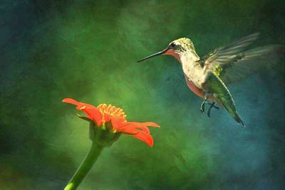 Humming Bird And Zinnia With Textures Series Art Print