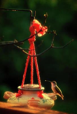 Humming Bird At Sunrise 03 Vertical Art Print