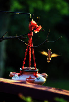 Mixed Media - Humming Bird At Sunrise by Thomas Woolworth
