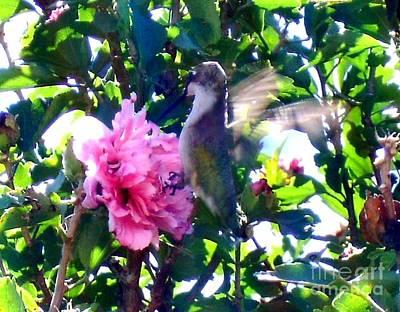 Photograph - Humming Bird by Ej Catoe