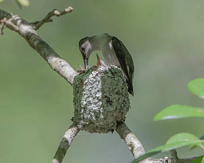 Photograph - Hummingbird Feeder by Jim Gray