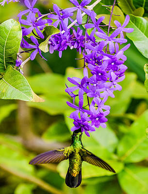 Photograph - Humming Bird Flowers by Daniel Marcion