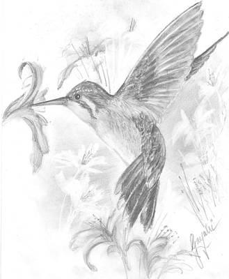 Angelic Drawing - Humming Bird by Gayatri Ketharaman
