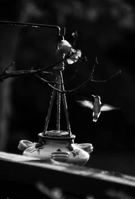 Humming Bird Humming Bird At Sunrise Bw Art Print