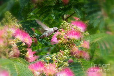 Photograph - Humming Bird by Kevin Bohner