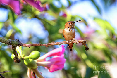 Photograph - Humming Bird Pink Flowers by Stephanie Hayes
