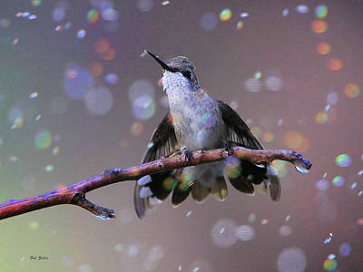 Photograph - Humming In The Rain by Bob Zeller
