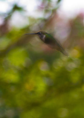 Photograph - Hummingbird - 1 by Charles Hite