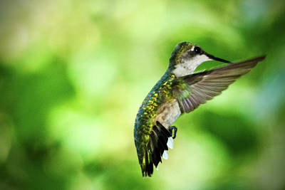 Photograph - Hummingbird 05 - 9-13 by Barry Jones