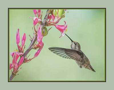 Photograph - Hummingbird 0553-051318-1cr-matte by Tam Ryan