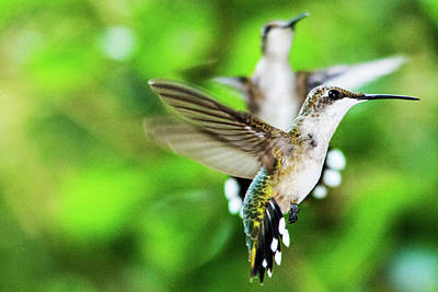 Photograph - Hummingbird 08 - 9-13 by Barry Jones