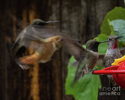 Photograph - Hummingbird 12 by Christy Garavetto