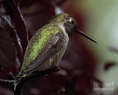 Photograph - Hummingbird 2 by Christy Garavetto