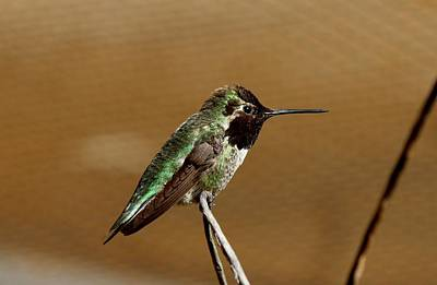 Photograph - Hummingbird - 2 by Christy Pooschke