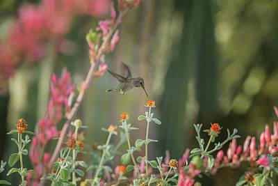 Photograph - Hummingbird 3000 by Tam Ryan