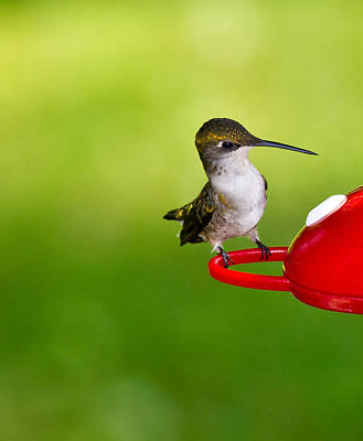Hummingbird 4 Art Print by Edward Myers