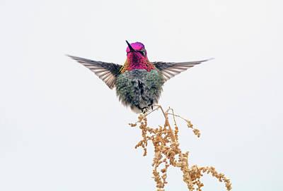 Photograph - Hummingbird 7445-021418-1cr by Tam Ryan