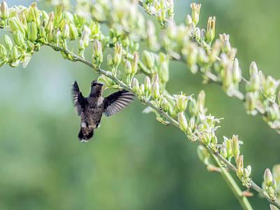 Photograph - Hummingbird 7718-cr by Tam Ryan