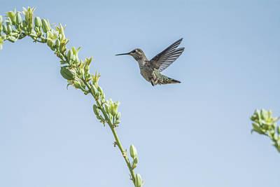 Photograph - Hummingbird 7728 by Tam Ryan