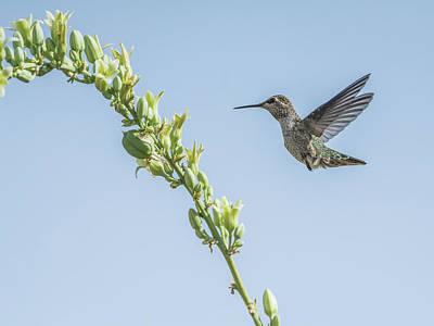 Photograph - Hummingbird 7728cr by Tam Ryan