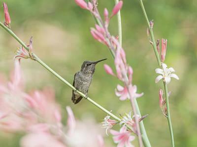 Photograph - Hummingbird 7740-cr by Tam Ryan
