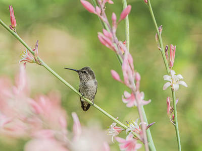 Photograph - Hummingbird 7750-17 by Tam Ryan