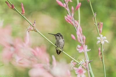 Photograph - Hummingbird 7750 by Tam Ryan