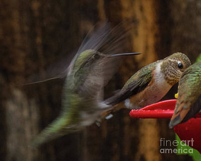 Photograph - Hummingbird 9 by Christy Garavetto