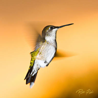 Photograph - Hummingbird Agains The Sunset by Rikk Flohr