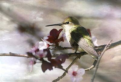 Photograph - Hummingbird And Blossoms 2 by Fraida Gutovich