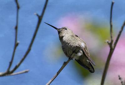 Photograph - Hummingbird And Blossoms by Fraida Gutovich