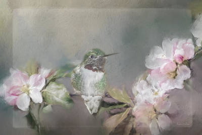 Photograph - Hummingbird And Blossoms by Teresa Wilson