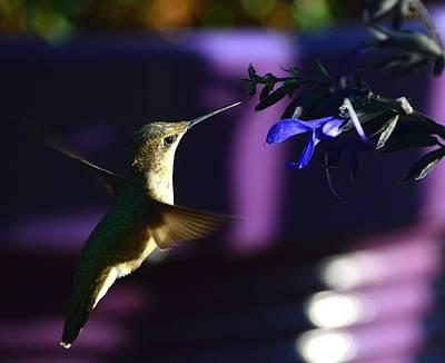 Hummingbird And Blue Flower Art Print
