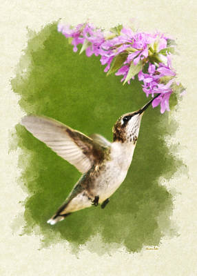 Hummingbird And Flowers Blank Note Card Art Print