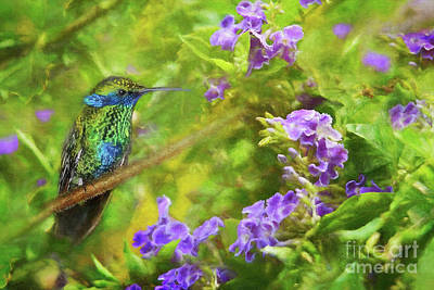 Photograph - Hummingbird And Flowers by Olga Hamilton