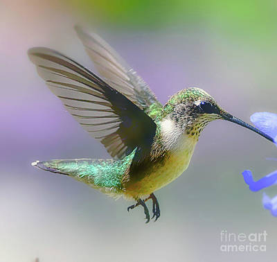 Photograph - Hummingbird  And Nectar  by Peggy Franz