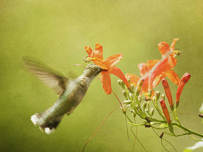 Photograph - Hummingbird And Orange Flower by Charles McKelroy