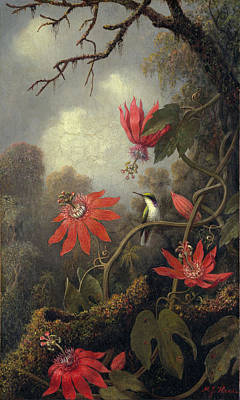 Hummingbird And Passion Flowers Art Print by Martin Heade