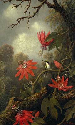 Passionflower Painting - Hummingbird And Passionflowers , Martin Johnson Heade 1819-1904 by Celestial Images