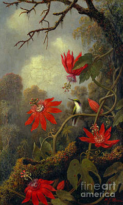 Passionflower Photograph - Hummingbird And Passionflowers 1877 by Padre Art