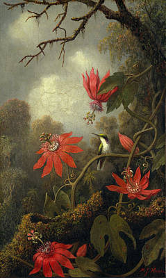 Passionflower Painting - Hummingbird And Passionflowers by Martin Johnson Heade