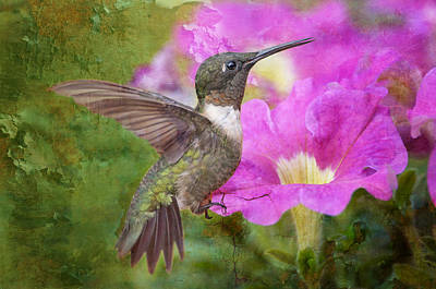 Tiny Bird Photograph - Hummingbird And Petunias by Bonnie Barry