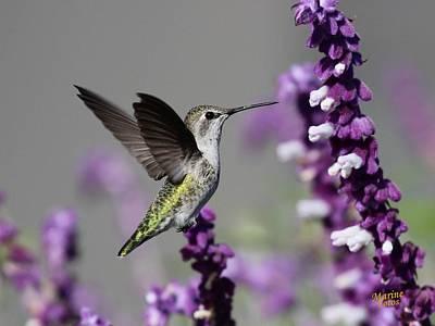 Hummingbird And Purple Flowers Art Print